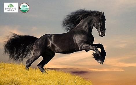 "Само слово ""ашвагандха"" пришло из санскрита и означает ""запах лошади"""