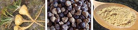 Maca superfood herbals