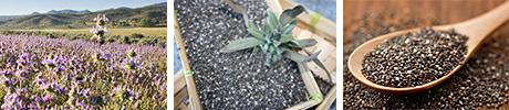 Chia Salvia-hispanica superfood herbals.lv